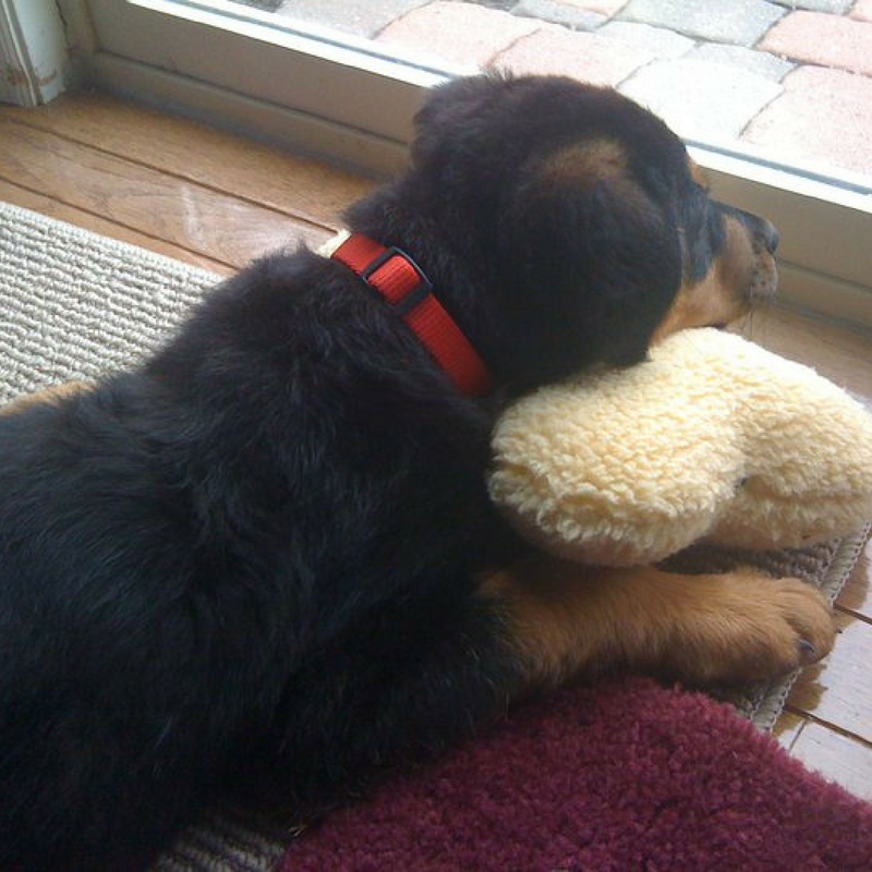 Why is Puppy Scents So Important?