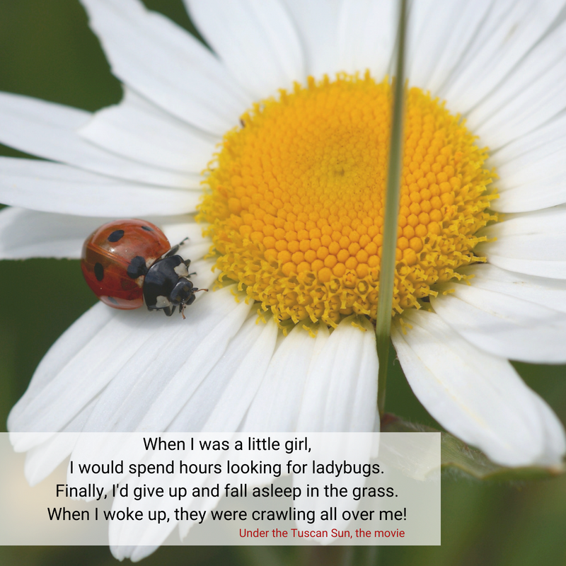Are You Chasing Ladybugs?